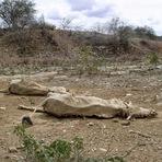 Meio ambiente - Escassez, O Mundo em Perigo