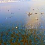 Bactérias deixam rastro de metano após vazamento de óleo