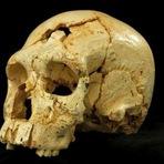Linhagem Neandertal