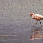 Flamingos, o Mundo em Cor-de-Rosa