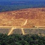 ?Desmatamento zero já é insuficiente na Amazônia?, alerta pesquisador Antonio Nobre