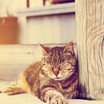 Animais - Gatos com anemia