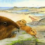 Animais - Antigo mamífero parecido com marmota foi descoberto em Madagascar
