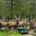 Animais - Avanço de espécies invasoras ameaça biodiversidade no planeta