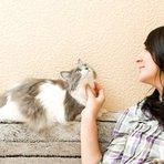 Animais - Gatos podem tomar leite?