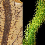Plantas Extintas de volta à vida?