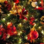 Auto-ajuda - O Natal da mata
