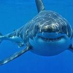Declínio de peixes predadores é vertiginoso e ameaçador