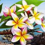 As 9 flores mais cheirosas do mundo