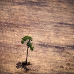 Novo estudo liga desmatamento da Amazônia a seca no país