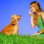 Cães entendem as palavras ditas a eles, diz estudo