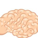 Como deixar seu cérebro em boa forma.