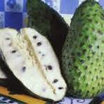 Graviola | Fruta nativa do Caribe e América Central