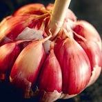 Saúde - O poder do Allium sativum, nome científico do Alho aliado diário contra o câncer