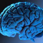 Você sabia? O ser humano possui uma bússola no cérebro