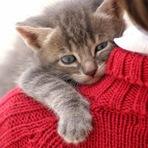 Gatos foram domesticados com carinho e comida, diz estudo