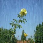 A Chuva. Um dos tipos de precipitação da água dentro do ciclo hidrológico.