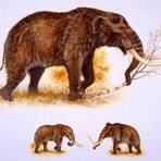 Mastodontes desapareceram da Beringia antes de seres humanos chegarem