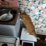 Gatos são os animais mais engraçados #12