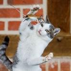 Fotógrafo flagra momento exato em que gato capturava rato na Alemanha