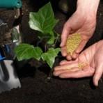 Jardinagem no inverno: o que fazer e não fazer
