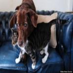Era uma vez um gato que virou guia de um cão cego