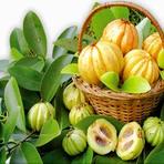 Garcinia cambogia o emagrecedor natural
