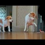 Beagles versus Cobra de Brinquedo