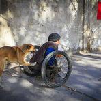 Cão é flagrado empurrando cadeira de rodas de sapateiro deficiente na China