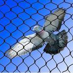 Telas de Proteção contra Pombos e Morcegos