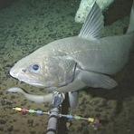 Animais - Novas espécies são registradas em habitat mais profundo já visto