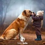 Animais - Estudos revelam como se sentem os cães