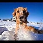 Animais - Gatos e cães brincando na neve pela primeira vez