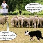 A ovelha paranoica da família