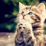 Animais - 20 fatos curiosos que a ciência já descobriu sobre gatos