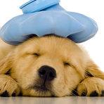 Animais - Como identificar se seu cão está sentindo dor
