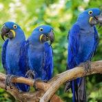 Animais - 10 animais ameaçados que podem desaparecer do Brasil