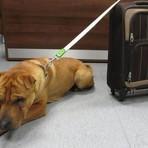 Utilidade Pública - Cachorro é amarrado a mala com seus pertences e abandonado em estação de trem