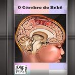 Documentário - O Cérebro do Bebê