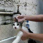 Animais - Gato toma banho e diz que é ruim!