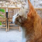 Animais - Quer saber mais sobre Erva de Gato ou Catnip?