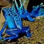 Animais - Top 10 animais mais venenosos do mundo