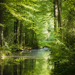Estilo de Vida - Linda imagem de floresta e rio