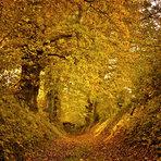 Estilo de Vida - Imagem espetacular de floresta