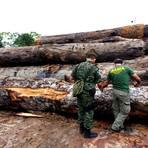 Ibama tem apenas 47 servidores para fiscalizar crimes ambientais, no AM