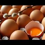 Dieta do ovo turbina o cérebro e ajuda a perder peso