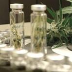 Anvisa libera importação de medicamento derivado da maconha