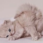 5 motivos para se ter um gato