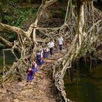 Pontes de raízes - 2