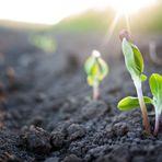 Meio ambiente - Sistema gera energia limpa a partir das plantas sem afetá-las